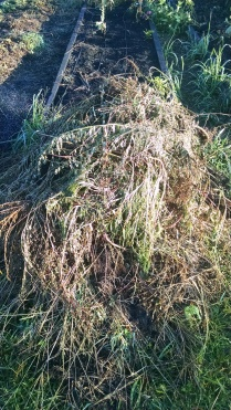 a three foot tall pile of weeds